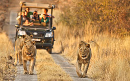 Game Drives & Safaris